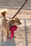 Dog Portraits Royalty Free Stock Images