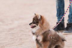 Dog Portraits stock photos