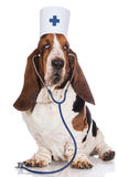 Dog posing as a doctor royalty free stock photo
