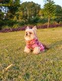 Dog Posing in the Garden Royalty Free Stock Photo