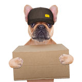Dog postman Royalty Free Stock Photo