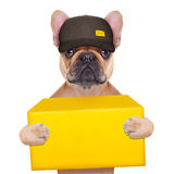 Dog postman Stock Image