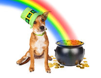 Dog With Pot of Gold and Rainbow. Cute crossbreed puppy wearing a green Irish St. Patrick's Day hat sitting next to a pot of gold at the end of a rainbow Royalty Free Stock Image