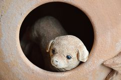 Dog in the pottery  hole Stock Photos