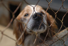 Dog in pound. Sad looking old dog in a shelter Stock Photography