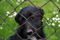 Dog pound puppy. Cute sad little puppy in animal shelter behind the bars Royalty Free Stock Photo