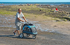 Dog in a pram at Robin Hood's Bay Stock Photography