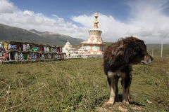 Dog and prayer tower Stock Photography
