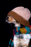 This dog is prepared for winter. Dog with hat feeling all ready for the cold winter Stock Image