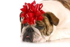 Dog present Stock Image