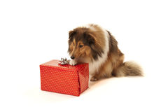 Dog with present Stock Images
