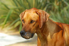 Dog with prey Stock Photo