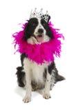 Dog princess Stock Photos