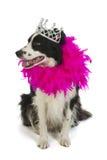 Dog princess Royalty Free Stock Images
