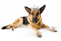 Dog Princess Fairy Stock Photography