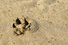 Dog Print in Sand. Royalty Free Stock Images