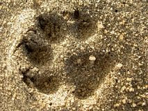 Dog Print in the Sand royalty free stock photos
