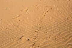 Dog print on sand. Dog footprints on the beach Stock Photos