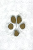 Dog Print in the Snow Stock Photos