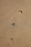 Dog Prints Royalty Free Stock Images