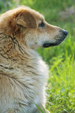Dog profile Stock Images
