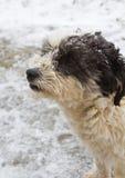 Dog profile Royalty Free Stock Photography