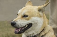 The dog profile. Royalty Free Stock Image
