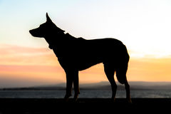 Dog in profile. A dog in profile at sunset Royalty Free Stock Images