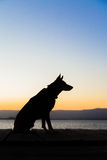 Dog in profile. A dog in profile at sunset Stock Image