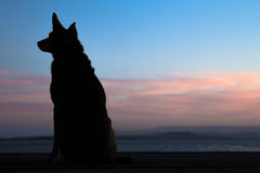 Dog in profile. A dog in profile at sunset Stock Photo
