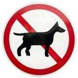 Dog prohibitory sign. Metal sign of no dog in rainy day isolated on white Stock Images