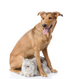 Dog protects a cat.  looking away. Isolated on white background Royalty Free Stock Photos
