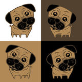 Dog (Pug) in 4 background colors Royalty Free Stock Images