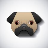 Dog pug race  design. Illustration eps10 graphic Stock Photos