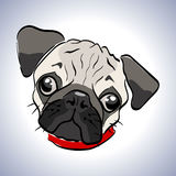 Dog pug. Vector illustration of a little dog. Character sad pug. Muzzle unhappy pooch. lonely doggy with sad eyes Stock Photos