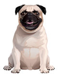 Dog. Pug Stock Photos