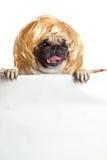 Dog pugdog with bunner isolated on white background. design sign Stock Image