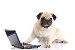 Dog pugdog computer isolated on white background laptop internet Royalty Free Stock Photography