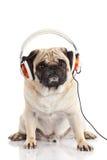 Dog pugdog with headphone isolated on white background listening to music Stock Photo