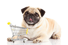 Dog pugdogshoppingtrollyen som isoleras på vit bakgrund shoppare Arkivfoto