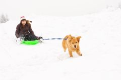 Dog pulling a happy kid on a snow sled. A golden retriever dog is pulling a happy young child down a snow covered hill on a sled Stock Photos