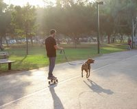 Dog pulling his owner on a skateboard royalty free stock image