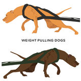 Dog pulling vector illustration.