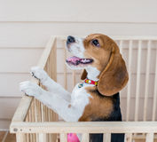 Dog. Punish naughty puppy By imprisoned in a cage stock photo