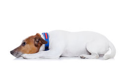 Dog punished Royalty Free Stock Photos