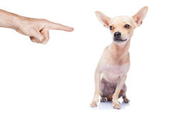 Dog punished Royalty Free Stock Images