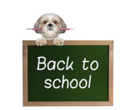 Dog pupil with pencil back to school Royalty Free Stock Images