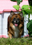 Dog in the puppet house. Dog in the pink puppet house Stock Image