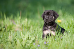 Dog puppies in a meadow Royalty Free Stock Image