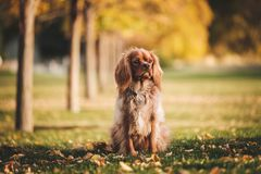 Dog, Puppy, Animal, Pet, Playground Stock Photography